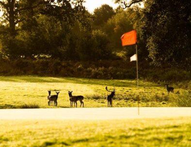 cvtgs-golf-phototour26